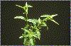 Photo_plante_adulte